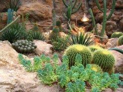 Cacti at the Wüstenhaus