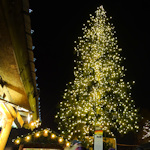Christmas tree in front of the Rathaus
