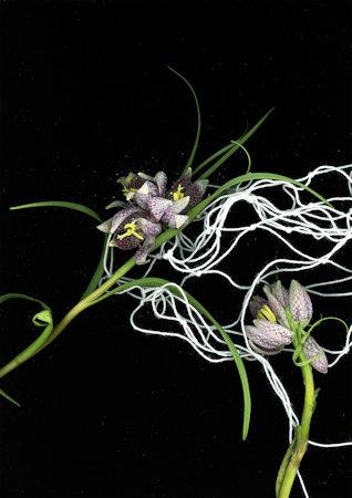 Flowers and yarn; photo © Wie-yi T. Lauw